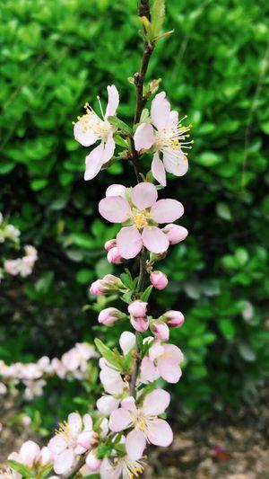 Beautiful Flower Photography Flowers,Plants & Garden Flowers EyeEm Enjoying Life