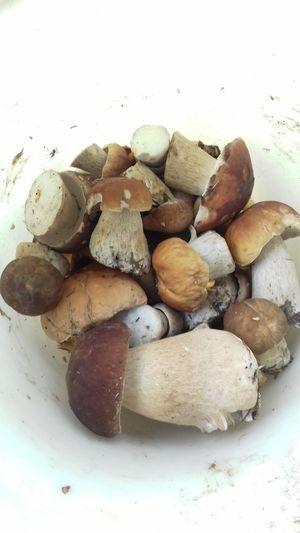 #mushrooms Mushrooms 🍄🍄 Mushrooms Mushroom Nature Boletus боровик Белый гриб лето грибнойсезон грибы White Background Variation Biology Close-up Food And Drink Fungus
