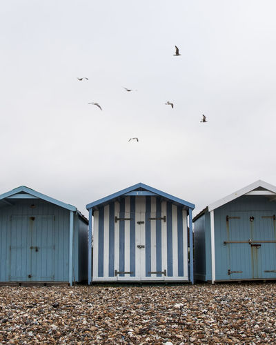 Sussex Beach Huts Animals In The Wild Architecture Beach Beach Huts Bird Building Exterior Built Structure Day Flock Of Birds Flying House Large Group Of Animals Minimalism No People Outdoors Politics Sea Seagull Sky Stones