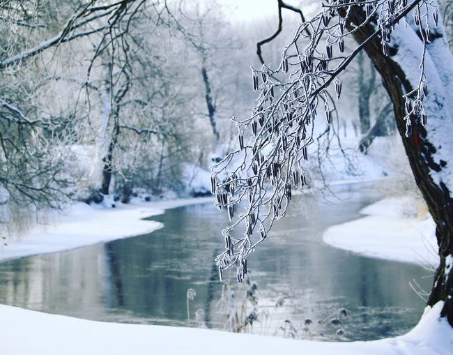 Frozen lake by trees during winter