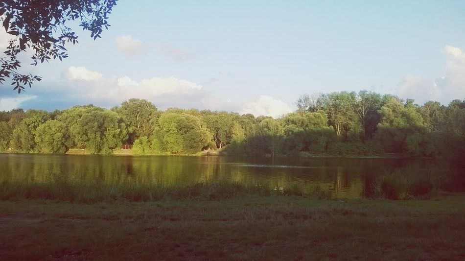 Nature Beuaty  The World Around Me Pond