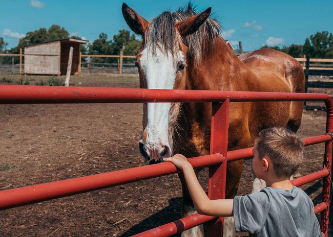 Animal Animal Head  Animal Wildlife Boys Child Horse Land Livestock Mammal Pets Real People