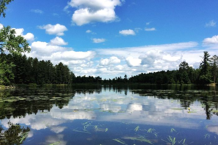 Reflection Sky Cloud - Sky Water Tree Nature Beauty In Nature Lake Outdoors Tranquility Day Tranquil Scene No People Scenics Growth Nature_collection Nature Lover Beauty In Nature Naturaleza Nature Photography North Woods  Minnesota Nature Minnesota Lake Vermilion Calm