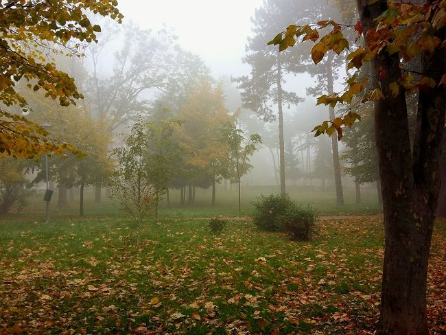 Tree Fog Nature No People Outdoors Beauty In Nature Grass Growth Day Water Freshness