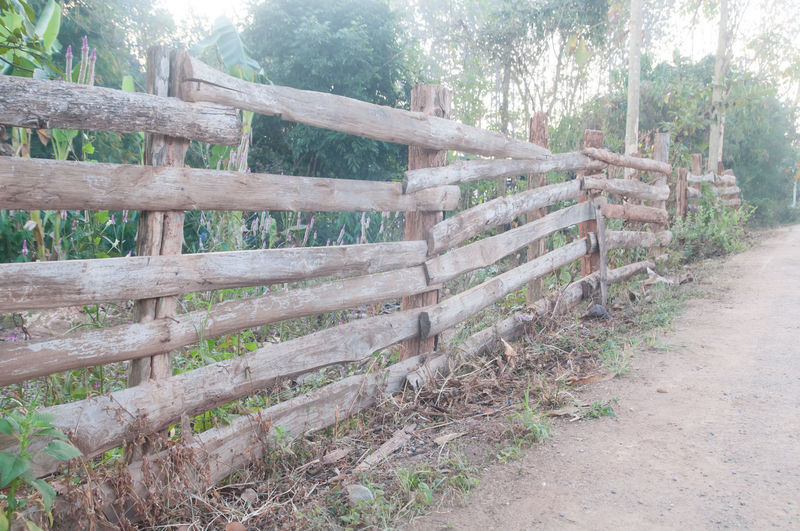 Tree Wood - Material Land Plant Day Nature Forest Boundary Barrier No People Fence Outdoors Tranquility Landscape Wood Non-urban Scene Architecture Field Direction Rural Scene Fences Fences & Beyond Fencepost Fence Post