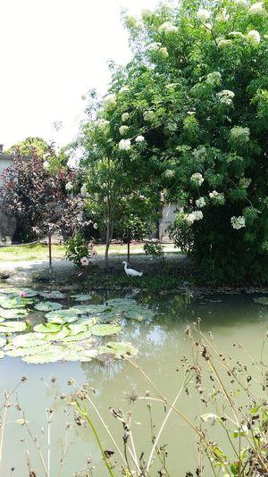 小半島之旅-彰化-菁花園 From My Point Of View Country Life Taiwan 攝影 EyeEm Nature Lover The View And The Spirit Of Taiwan 台灣景 台灣情 菁花園 彰化 Water Tree Animal Themes Plant Sky Green Color