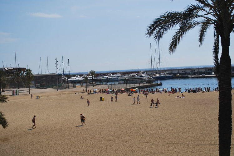 Adult Adults Only Barcelona Barcelona, Spain Beach Beach Photography Catalonia Catalunya Coastline Day Large Group Of People Nature Outdoors Palm Tree People Sand Scenics Sea Sky SPAIN Summer Tourism Travel Destinations Vacations Water