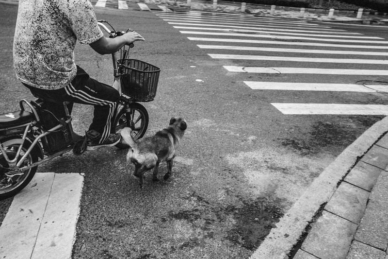 Rear view of woman with dog on road