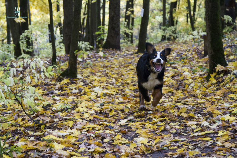 Dog Pets Forest One Animal Nature Animal Themes Domestic Animals Day Outdoors No People Tree Portrait Mammal EyeEmNewHere