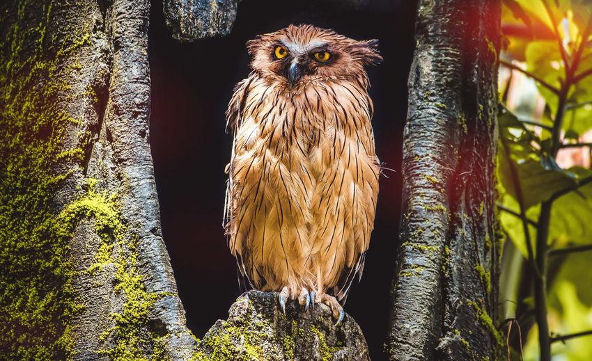 Tree Bird Of