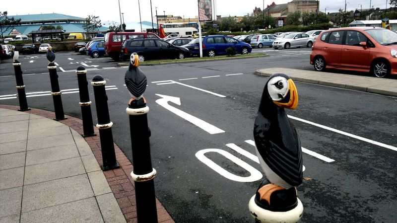 EyeEm Selects Puffin Transportation Road Marking Day Road Outdoors Bollards Morrisons Birds Sculpture Morecambe Bay