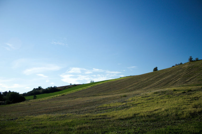 Landscapes in Marche Autumn Panorama The Week On EyeEm Tree Backgrounds Beauty In Nature Blue Day Field Grass Landscape Mammal Nature No People Outdoors Rural Scene Scenics Sky Sun Tree