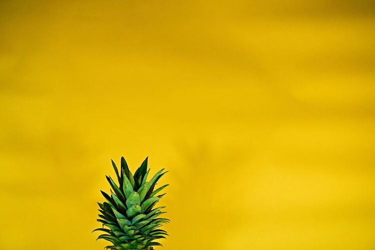 Cropped image of pineapple against yellow wall