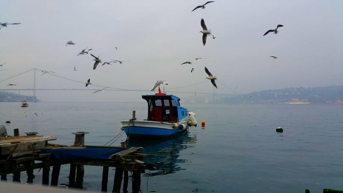 Turkinstagram Nikon D7000 Turkiyelovers Istanbullovers ıstanbul, Turkey Sea Life Freshness Istanbul Istanbullife Istanbul - Bosphorus Water Nature No People EyeEm Gallery Istagood Dramatic Light Fotografturkiye Instanature Atmosphere Cloud - Sky Close-up Otantik Nature Watercolour City