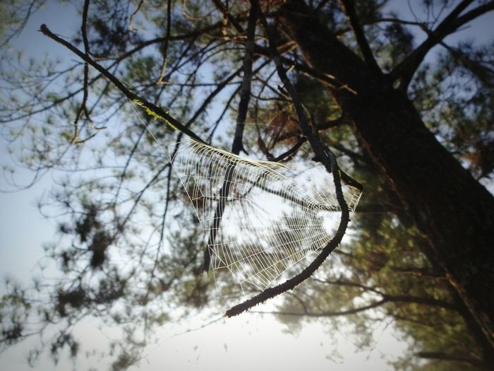 Day Tree No People Low Angle View Nature Branch Outdoors Sky Close-up Beauty In Nature EyeEmNewHere The Week On EyeEm Freshness Springtime