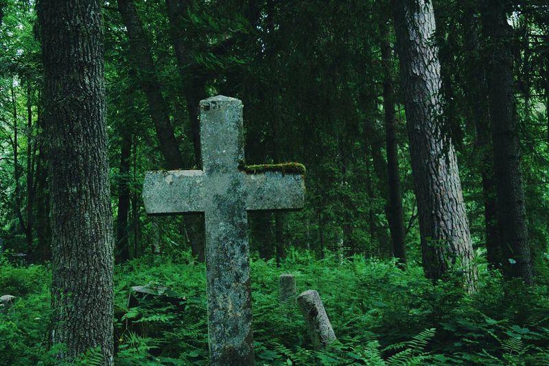Cross on tree trunk