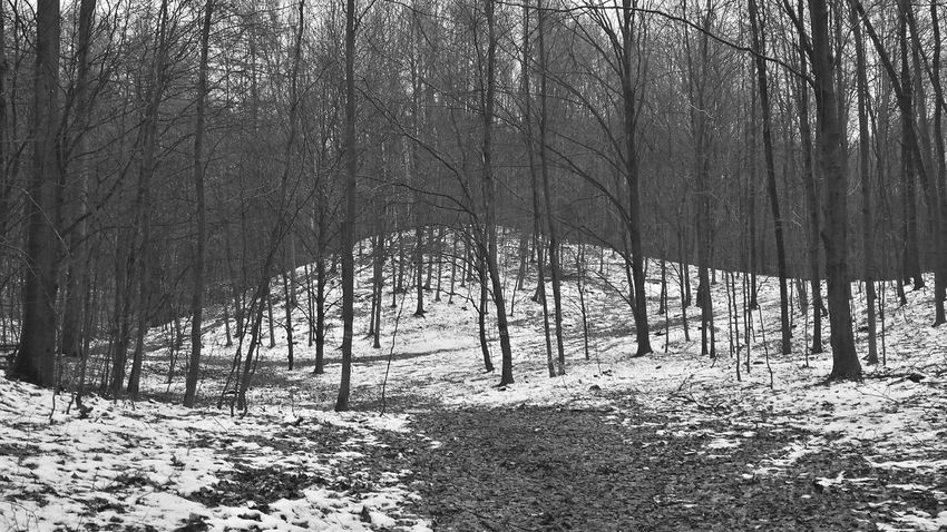 Black & White Blackandwhite Nature Winter Smartphonephotography Forest Snow ❄ Nature_collection Zielony Las