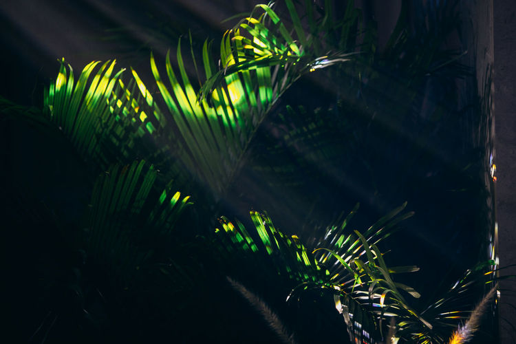 Plant Green Color Growth Palm Tree Tree Leaf Nature Tropical Climate No People Palm Leaf Night Beauty In Nature Plant Part Close-up Illuminated Outdoors Focus On Foreground Selective Focus Bamboo - Plant Neon Lights Party