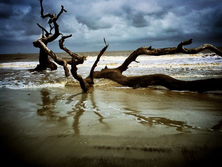 Creative Light And Shadow Jekyll Island Driftwood Beach Ga. EyeEm Best Shots - Landscape Landscape_Collection Peaceful
