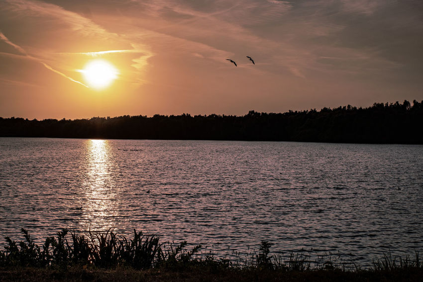 Lake View Landscape The Week on EyeEm In Thoughts With You Genießen Beauty In Nature Idyllic Tranquility Tranquil Scene Sky Heaven Beautiful Scenery Scenics Scenery Abschalten Calm Bird Flying Water Sunset Lake Silhouette Tree Reflection Lakeside Horizon Over Water