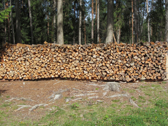 Pile of firewood with forest background . Fiè allo sciliar, South Tyrol, Italy Alpine Backgrounds Construction Industry Cracked Cross Section Dolomites Firewood Fiè Allo Sciliar Forest Fossil Fuel Fuel And Power Generation Green Heap Italy Lumberjack Pattern Sciliar Separation Stack Timber Tree Tyrol Wood Woodpile Woods