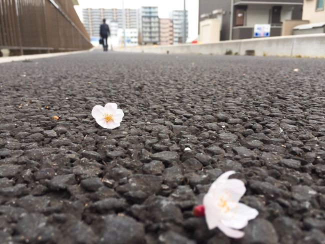 Urban Spring Fever Photos That Will Restore Your Faith In Humanity Light Up Your Life Taking Photos