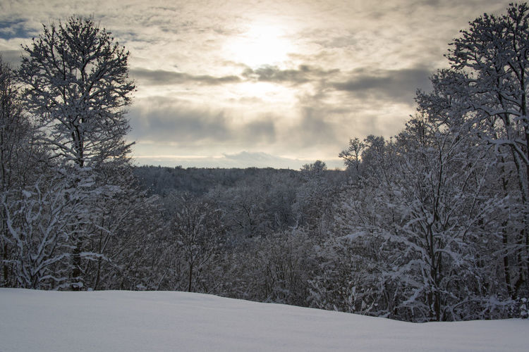 snow covered trees at sunrise Bare Tree Cloud Cloud - Sky Clouds, Forest, Snow, Sun Shine, Sunrise, Tree, Trees, Valley, White, Winter, Wood Cloudy Cold Temperature Covering Day Growth Idyllic Landscape Mountain Nature No People Non-urban Scene Outdoors Scenics Season  Sky Snow Tranquil Scene Tranquility Tree Weather Winter