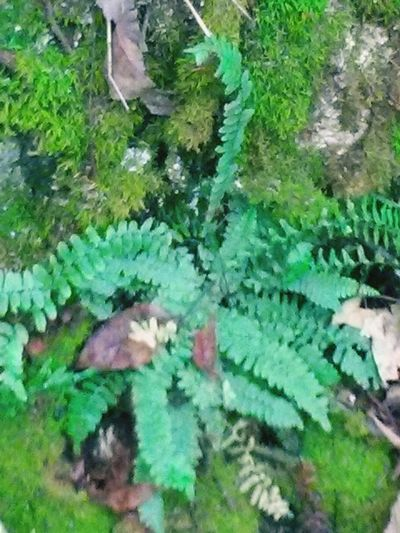 fern Ferns Moss Trees Nature_collection Nature