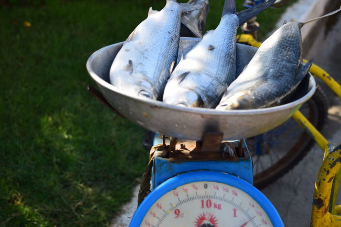 Fishes at one and a half kilos Close Up Close-up Fishes Fresh Produce Milkfishes Sunny Day Weighing Scale Weight