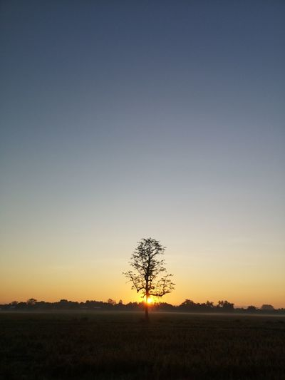 Silhouette trees on field against clear sky during sunset