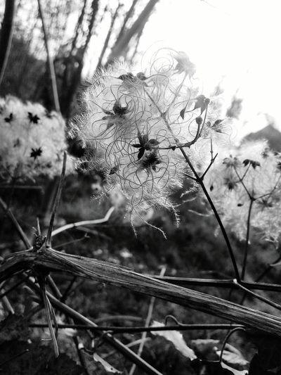 Nature Blackandwhite Winter End