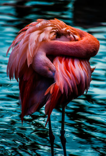 Pinky 💥 Zoo Animal Themes Flamingo Nature One Animal Outdoors Pink Color Water Zoophotography EyeEmNewHere