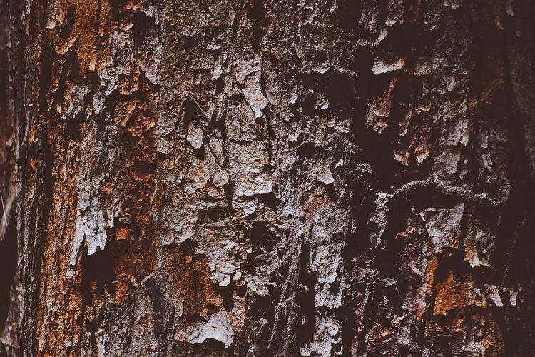 Nature Bark