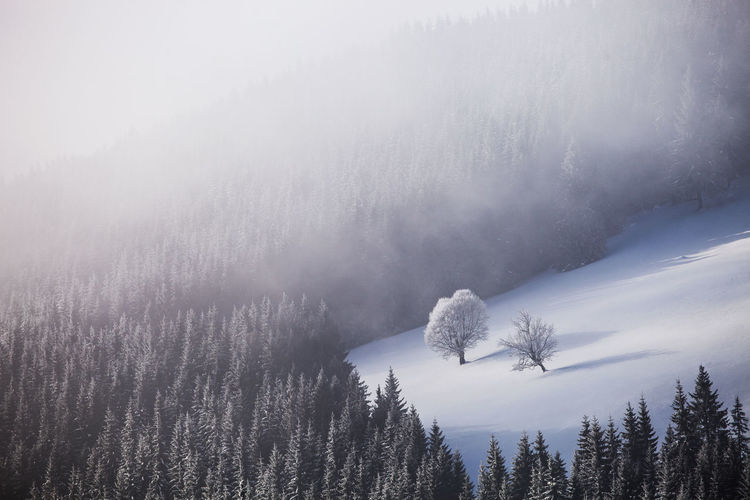 Winter landscapes with Rodnei Mountains, Romania. Alpine Clearing Ice Light Morning Nature Trees Weather Winter Beauty Cold Fog Foggy Forest Landscape Mist Mountain Pine Tree Season  Snow Sunrise Two White Perspectives On Nature