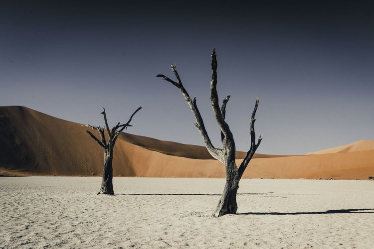 Low angle shot of 2 dead trees in Doodvlei Namibia, contrasted against the powerful hues of the background. Arid Climate Bare Tree Beauty In Nature Climate Dead Plant Desert Environment Isolated Land Landscape Nature No People Non-urban Scene Outdoors Plant Remote Sand Scenics - Nature Sky Tranquil Scene Tranquility Tree