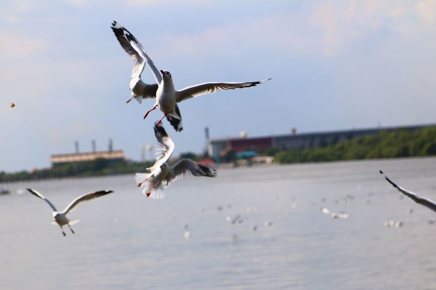 Flying Bird Spread Wings Animals In The Wild Animal Themes Animal Wildlife Mid-air No People Day Nature Sky Outdoors Water