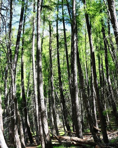 The Verticals Trees Mountjohnwalk Mtjohn Mountjohnobservatory Mountjohn Newzealand NZ Travel Canon Canon_photos Canonphotography Canon760D