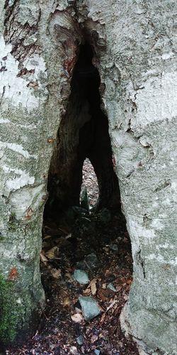 Shadow Day Outdoors No People Forest EyeEmNewHere Türkiye Beauty In Nature Yedigoller Tree