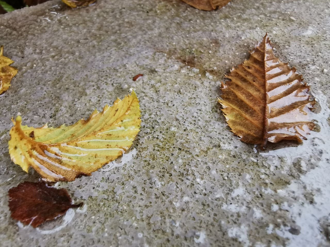 no people, leaf, close-up, plant part, high angle view, nature, food and drink, food, still life, day, autumn, outdoors, land, dry, plant, pattern, beauty in nature, brown, selective focus, leaves, temptation