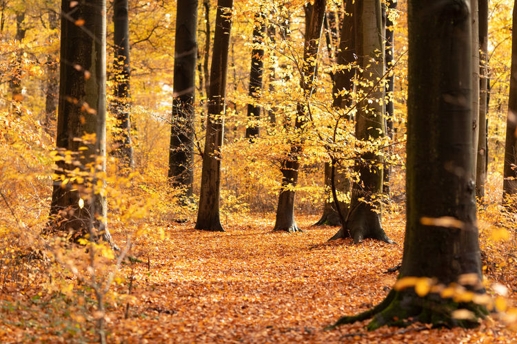 Tree Forest Land Plant Trunk Tree Trunk Nature Sunlight WoodLand Autumn Growth Beauty In Nature Day Change Tranquility No People Non-urban Scene Outdoors Tranquil Scene Scenics - Nature