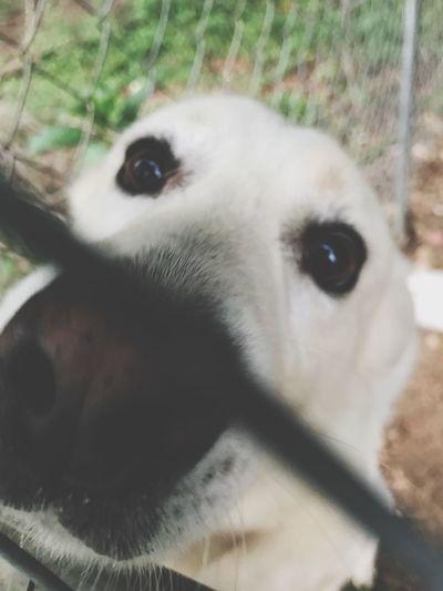 Dog Love Dog Mammal One Animal Animal Themes Animal Domestic Domestic Animals Pets Canine Close-up Looking At Camera