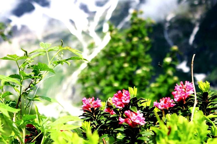 Fiori Natura Flowers Mountain View Flowers, Nature And Beauty Api Insects  Nature