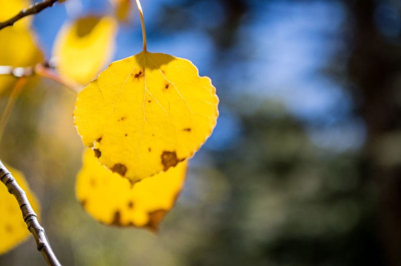 Autumn Autumn Fall Leaf Focus On Foreground Close-up Yellow Plant Growth Beauty In Nature No People Nature