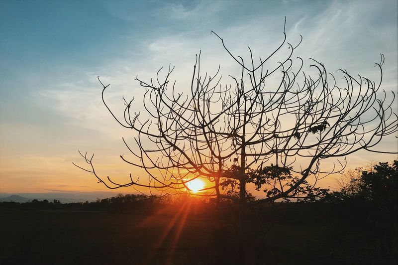 Sunset Philippines Northern Philippines Isabela, Philippines Trees Orange Sky Nature Calm The Week On EyeEm EyeEmNewHere Lost In The Landscape