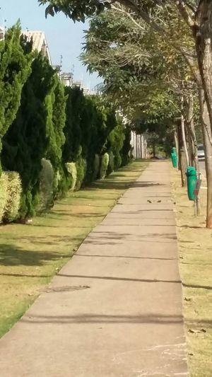 Passargada passarela dos pinheiros. São Paulo, Brasil Caminho Contemplation Garden Nature