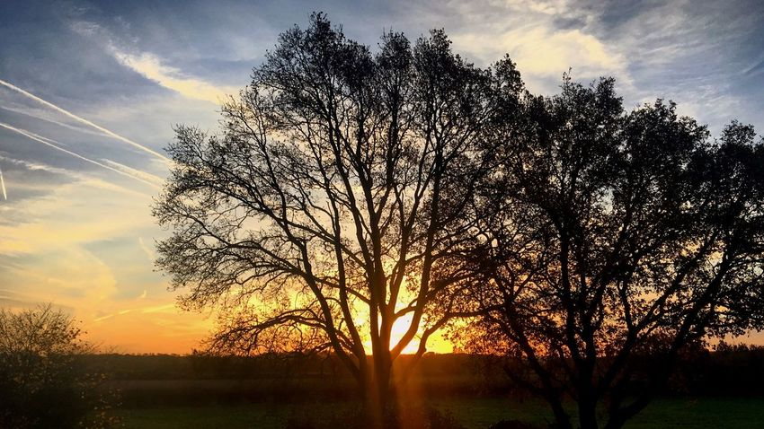 Sunrise Tree Sky Sunset Nature Tranquility Beauty In Nature Tranquil Scene Silhouette No People Cloud - Sky Scenics Growth Sun Outdoors Bare Tree Day Sunrise