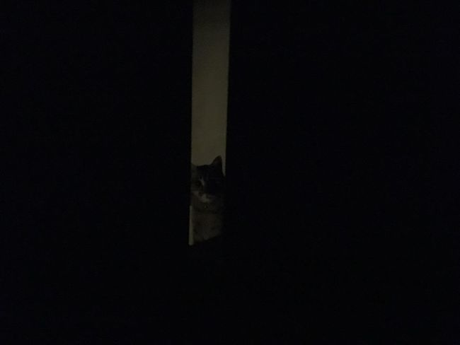 Cat Night Peeping