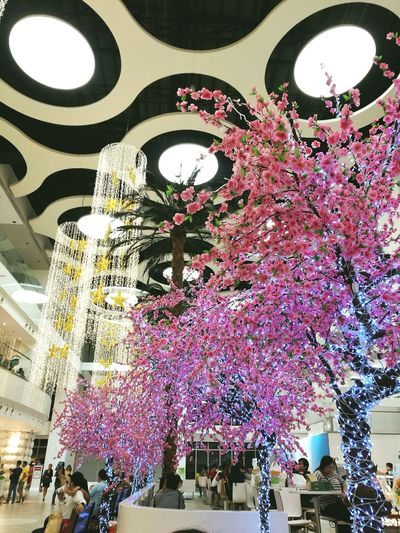 Built Structure City Celebration Low Angle View Architecture Mall Life Aesthetics Flowers Lights Interior Views Interior Design