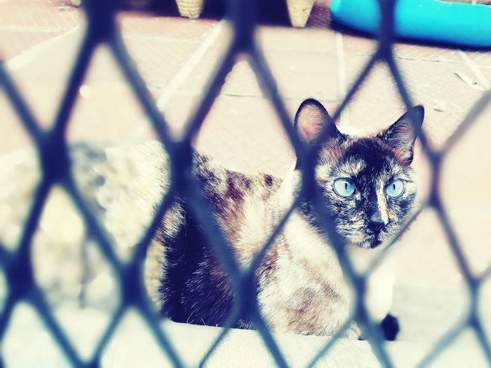 Blue eyes Feline Gato Cat Kitten Claws Cute Azul EyeEmNewHere Metal Chainlink Fence Pattern Close-up