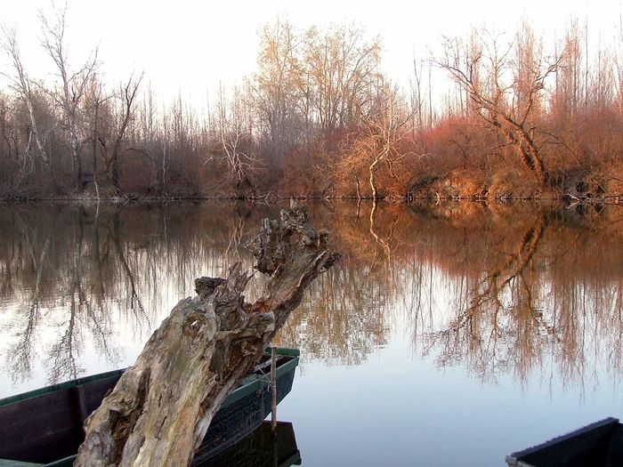 Autumn Autumn Colors Branches Deadriver Faddiduna Nature Plant Reflection Reflections In The Water River Riverside Silence Silent Moment Tranquil Scene Tranquility Landscapes With WhiteWall